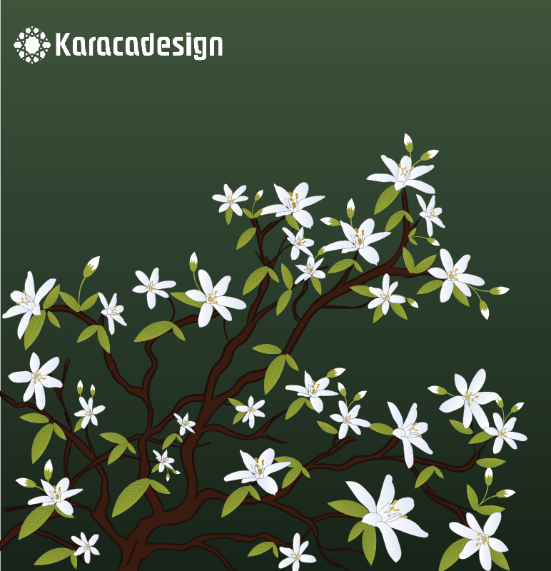 mangolia grafik